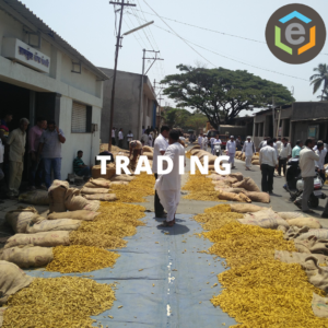 A trading scene from APMC Sangli, Maharashtra